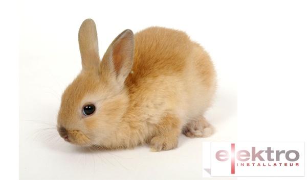 rabbit_600